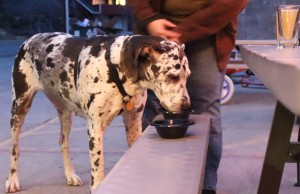 """""""Doggie Happy Hour"""" at Riverside Market. Photo by Anna Quesenberry The Broadside"""